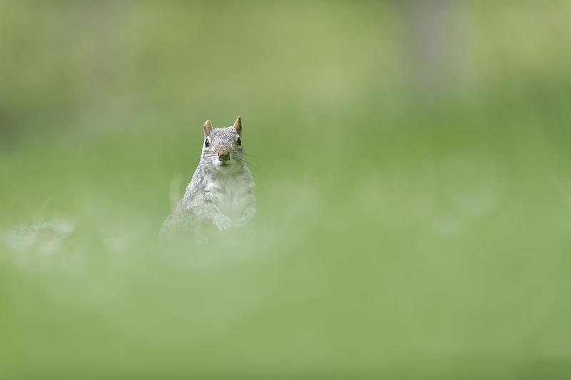 Écureuils de Londres - Voyage photo à Londres - Cours photo animalier
